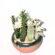 Cactus Arrangment