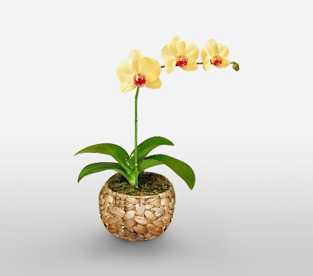 Yelow Orchide plant