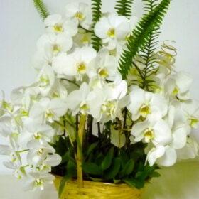 orchide basket